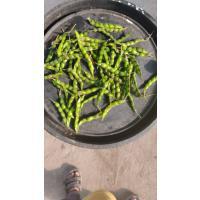 Tuver(Green) pinion pea