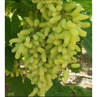 Super Sonaka Grapes