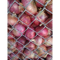 Nasik Red Onions