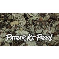 Stone Flower | Pathar Ke Phool Spice | Dagad Phool | Kalpasi