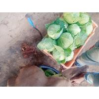 Pattagobhi, Gulabrao Kale, mo. No. 9552230676