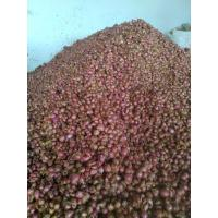 Organically Grown Small Onions