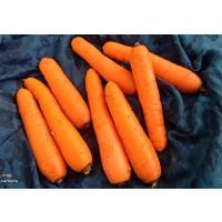 Nilgiris Carrot