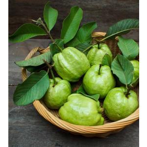 Guava-Leaves.jpg