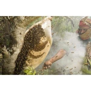 Honey Collect.jpg